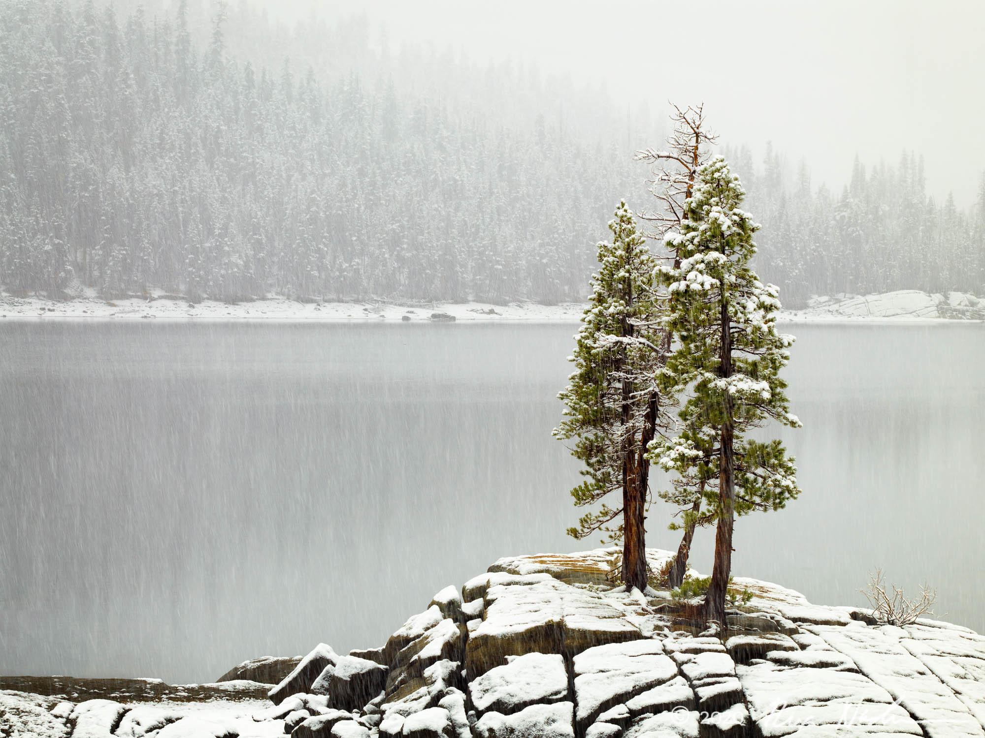 Trees in Storm - Sierra Foothills
