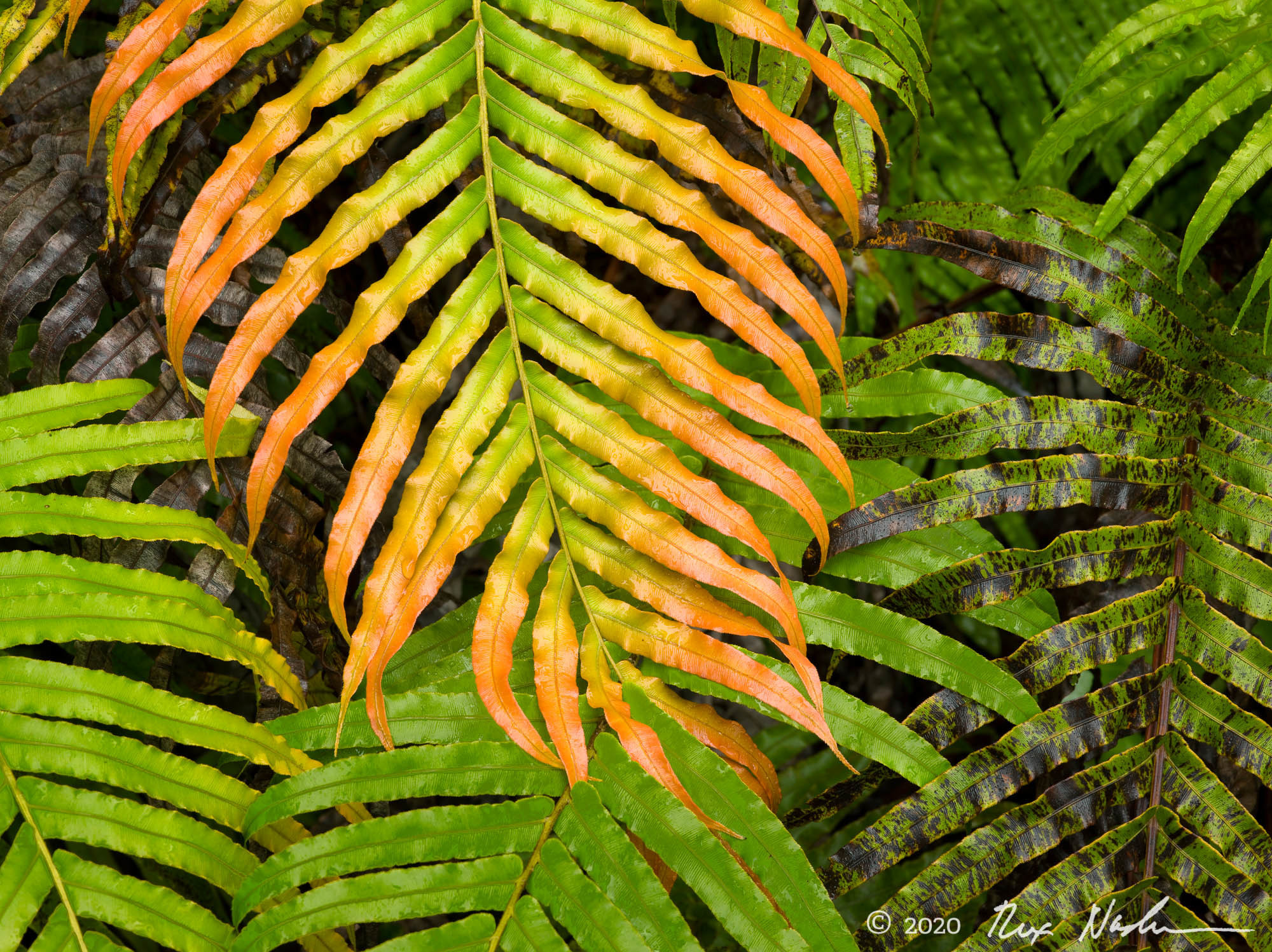 Multicolored Ferns - South Island, New Zealand