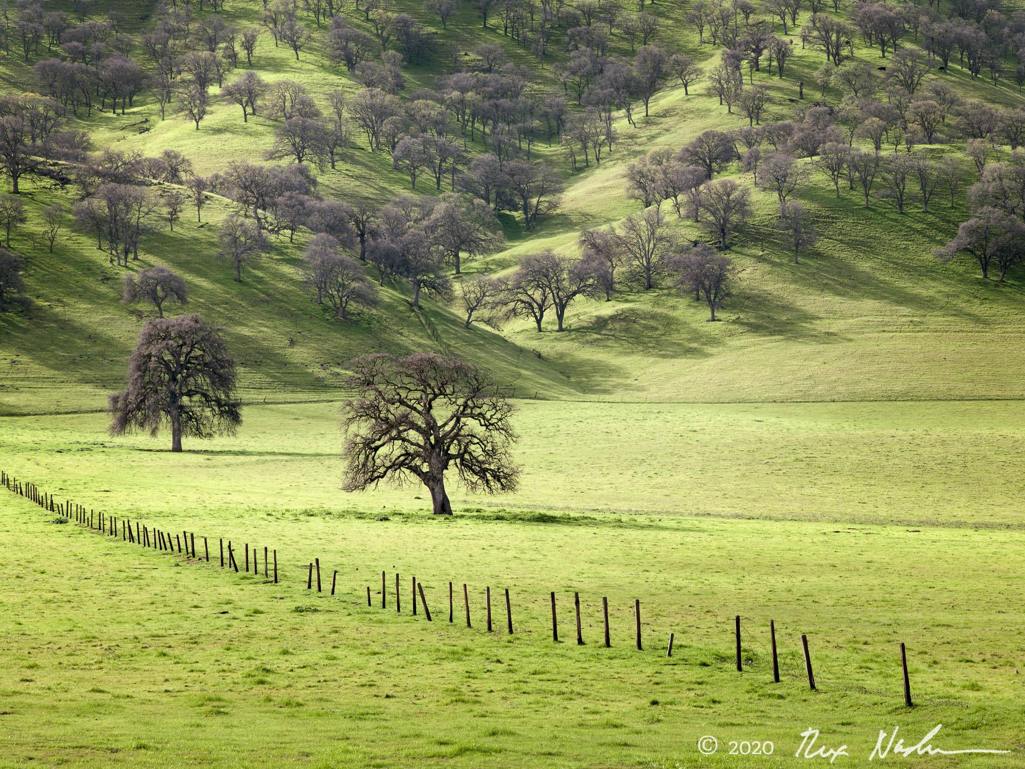 Valley Oaks - East Bay