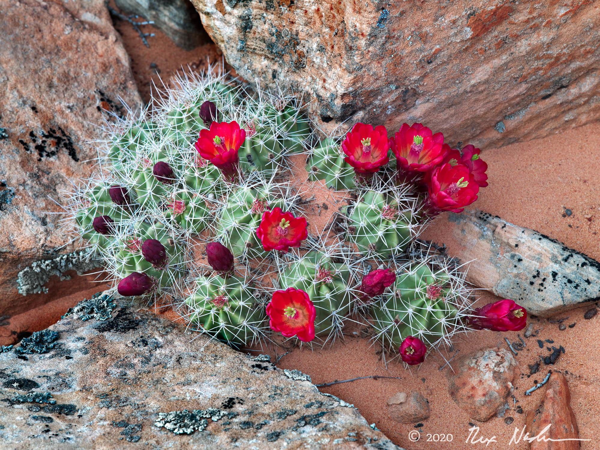 Desert Wine - Paria Wilderness