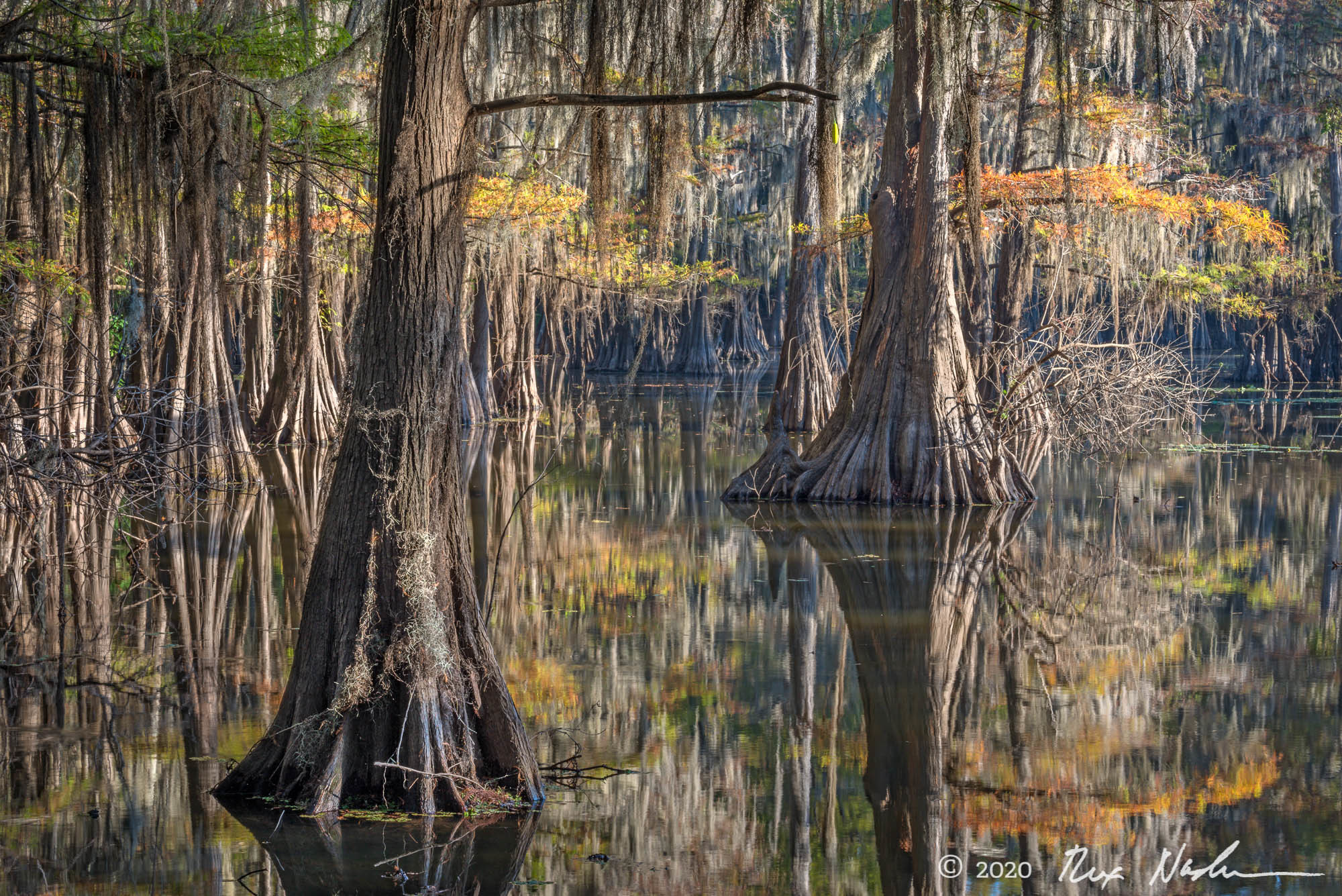 Hall of Mirrors - East Texas