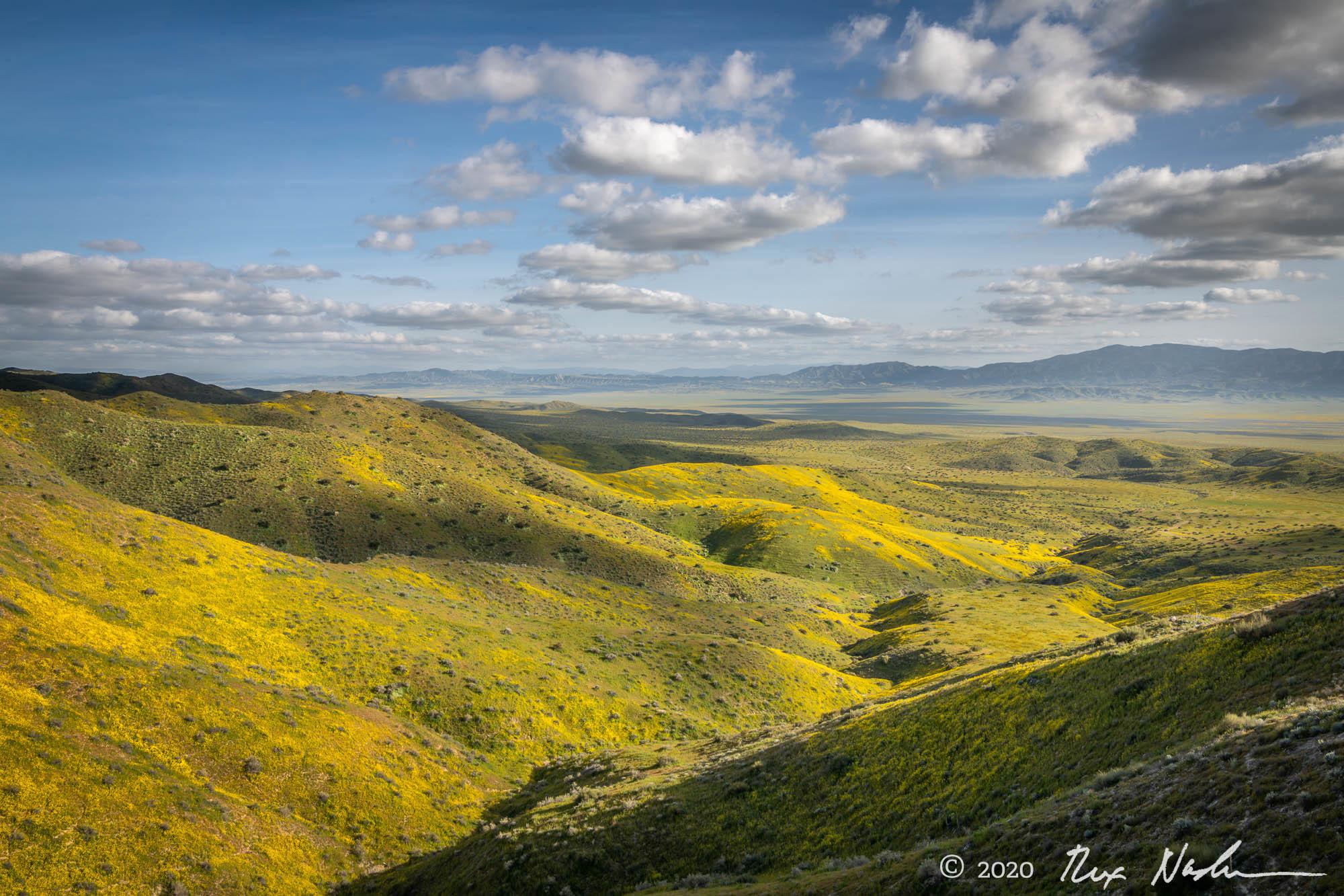 Amarillo - Carrizo Plain