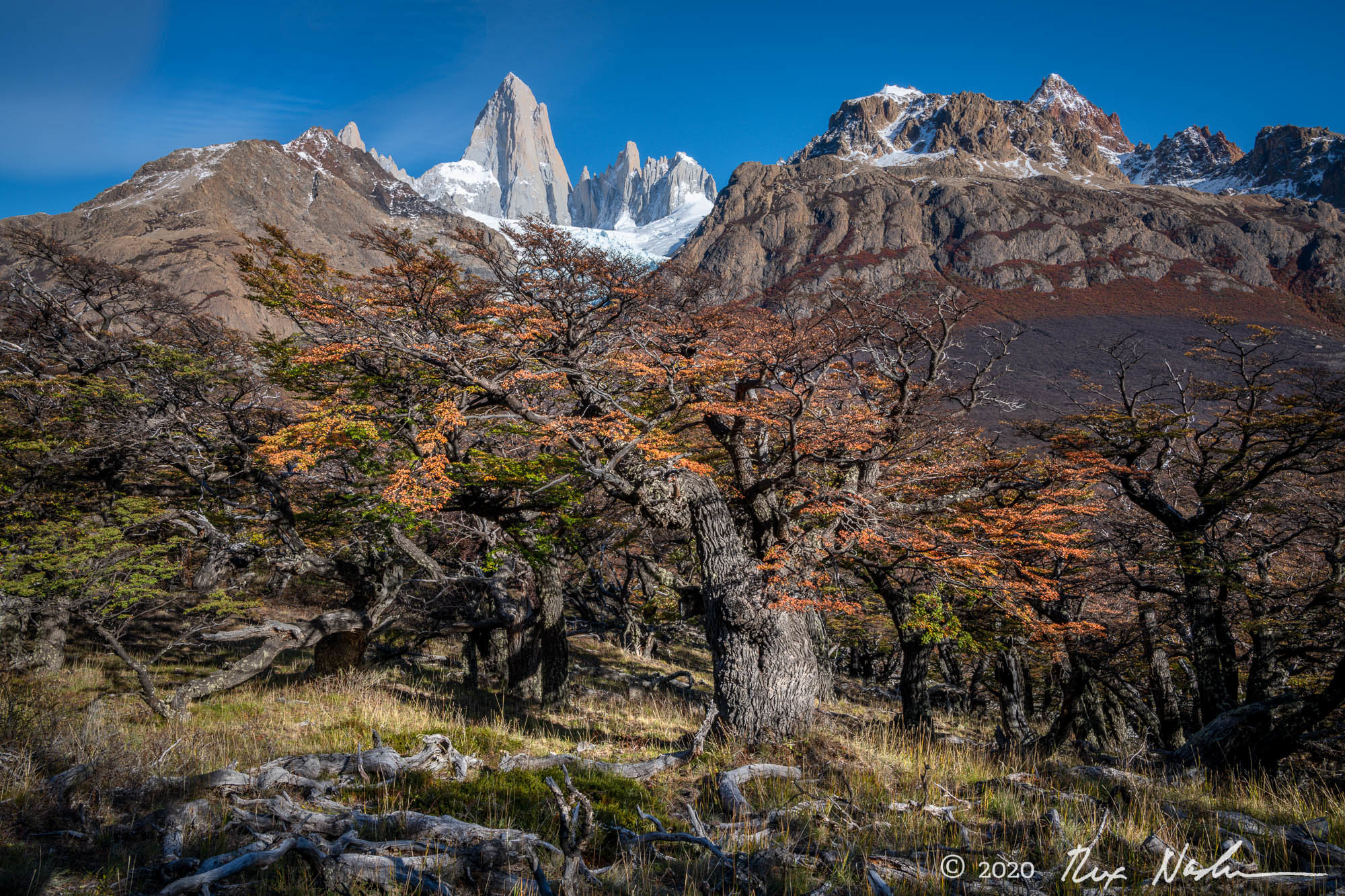 Vieja Lenga - Near El Chalten, Argentina
