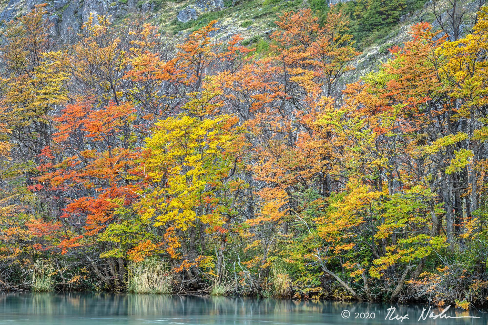 Austral Autumn - Near El Chalten, Argentina