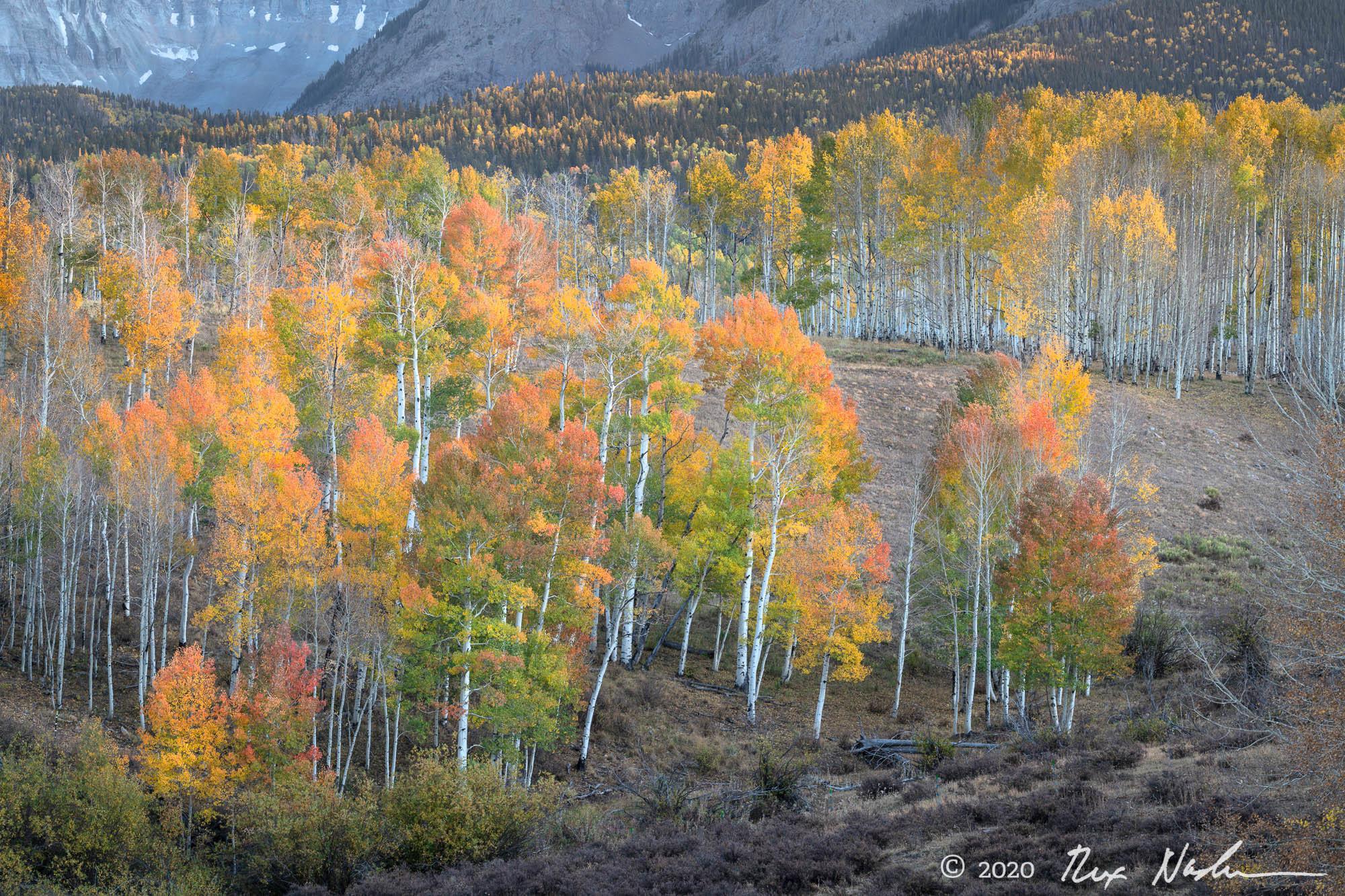 Park - San Juan Mountains, Colorado