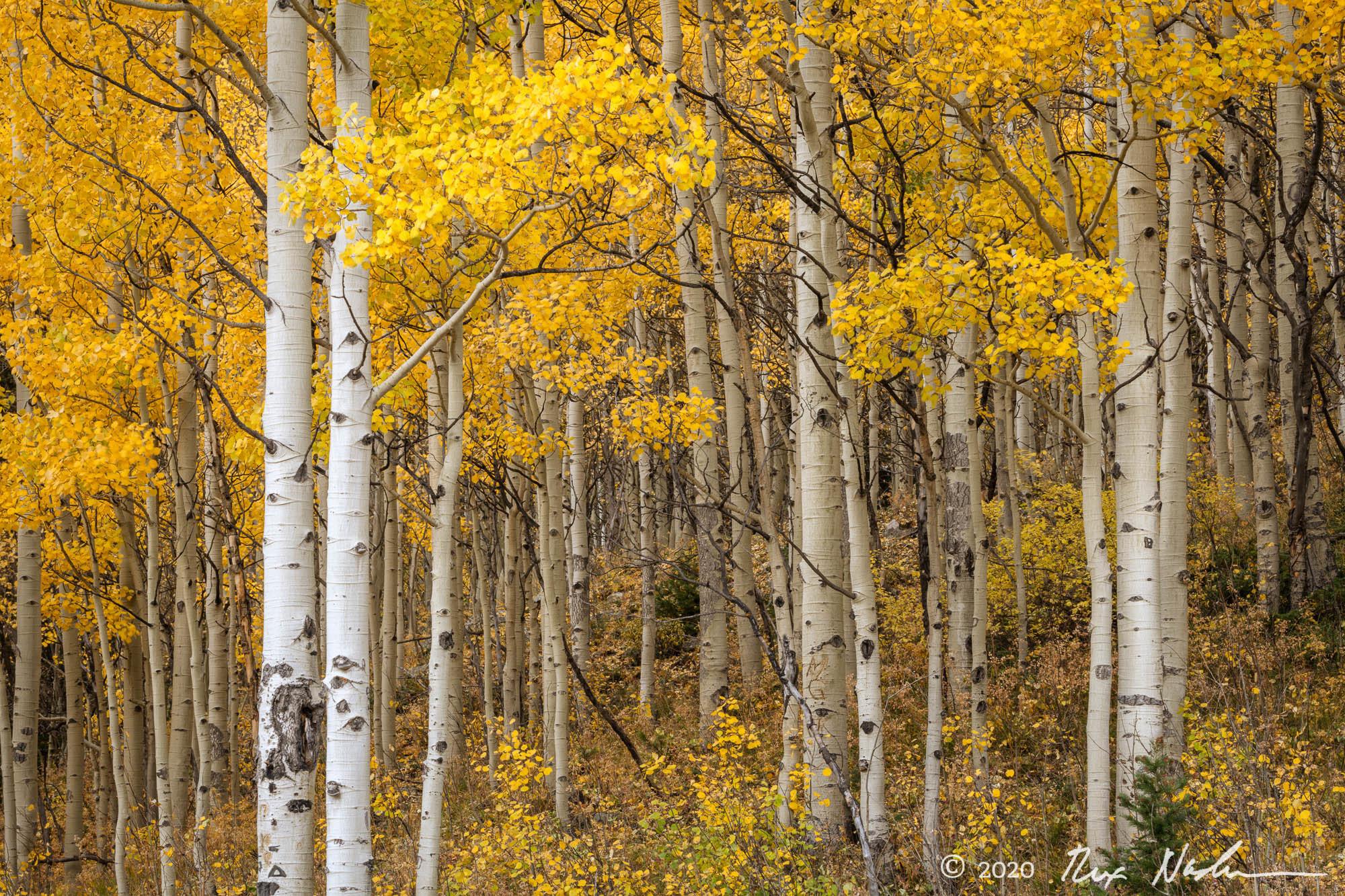 Model Forest - San Juan Mountains, Colorado