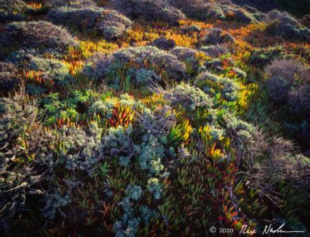 Iceplant Bouquet