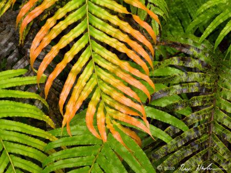 Multicolored Ferns