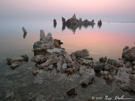 Dawn Horizon