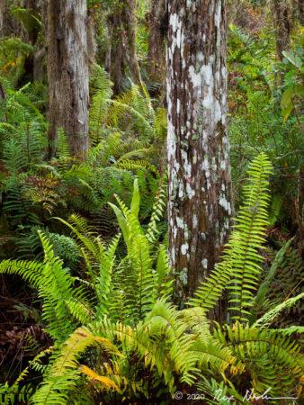 Totem Cypress