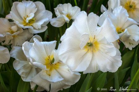 Ephemeral Spring