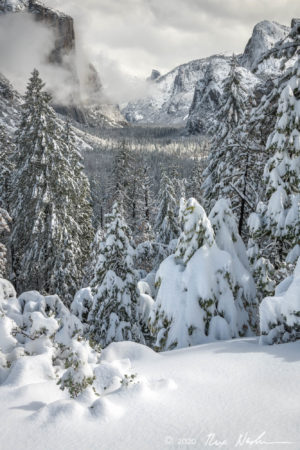 Snow Trees with Valley